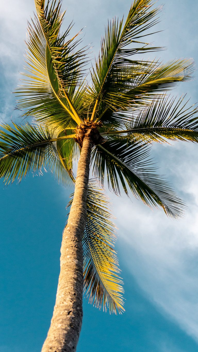 palm wallpaper 143